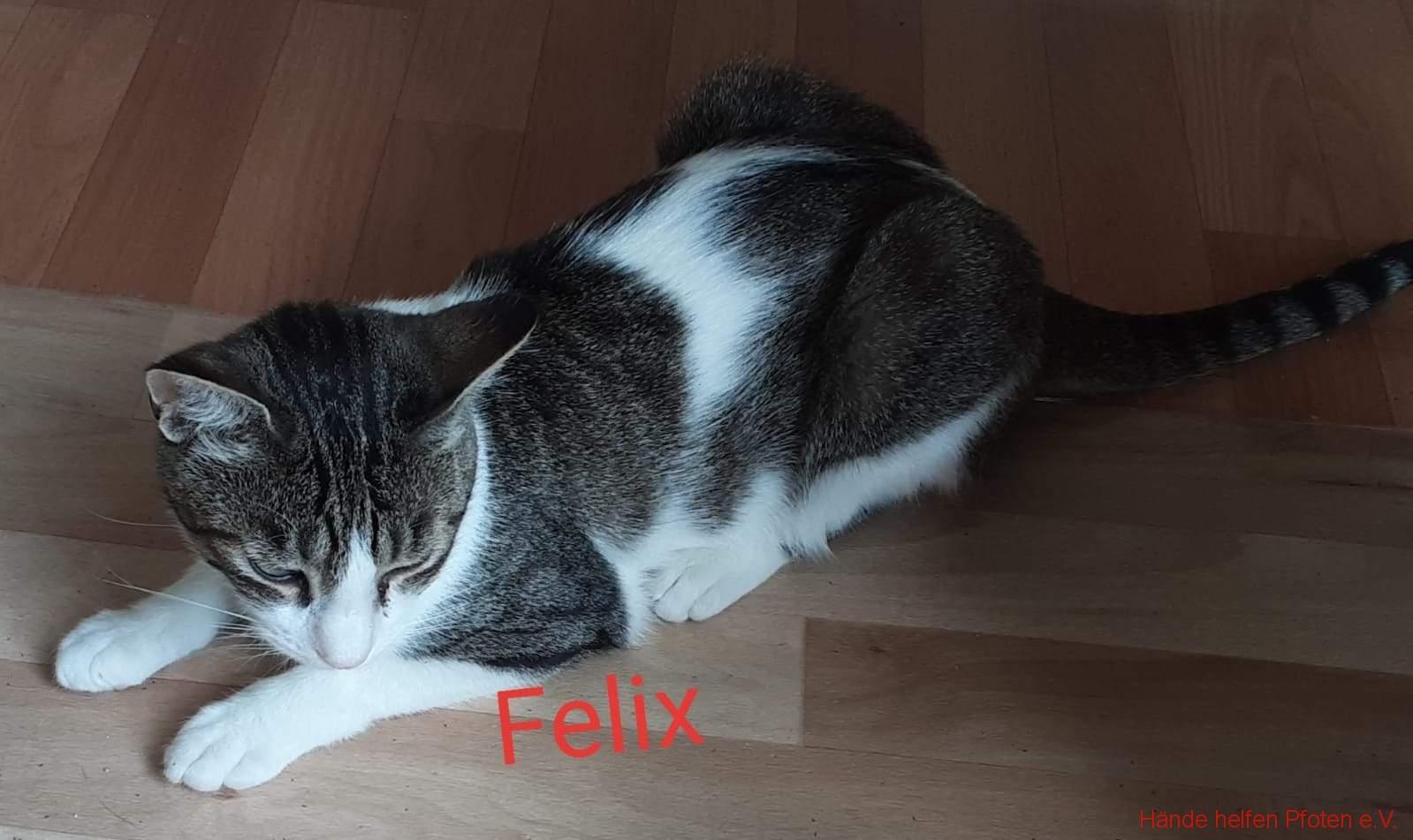 Felix01