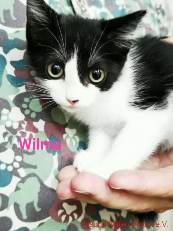 Wilma01